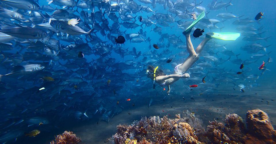 Alles über Tauchen, PADI Tauchkurse und Meeresschutz